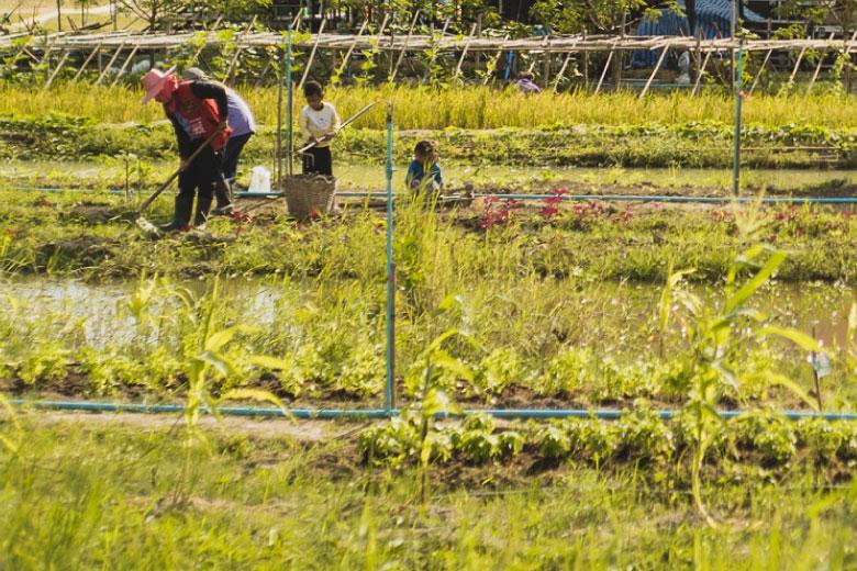 Wonderfruit Farm